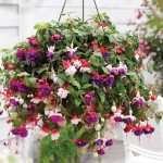 10-Inch-Fuschia-Basket